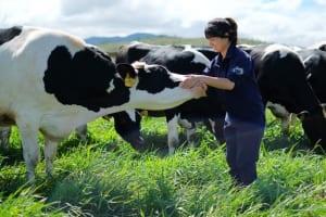 Cập nhật ngành sữa: Lựa chọn tốt cho chiến lược phòng thủ.